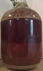 Australian Pale Ale #1