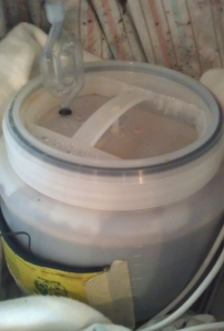 Summer Ale fermenting away